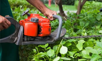 Shrub Removal in Dayton OH Shrub Removal Services in Dayton OH Shrub Care in Dayton OH Landscaping in Dayton OH