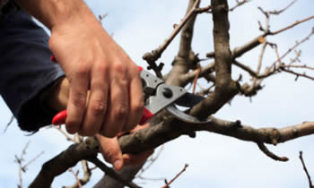 Tree Pruning in Dayton OH Tree Pruning Services in Dayton OH Quality Tree Pruning in Dayton OH