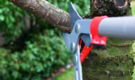 Tree Pruning Services in Dayton OH