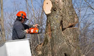 Tree Removal in Dayton OH